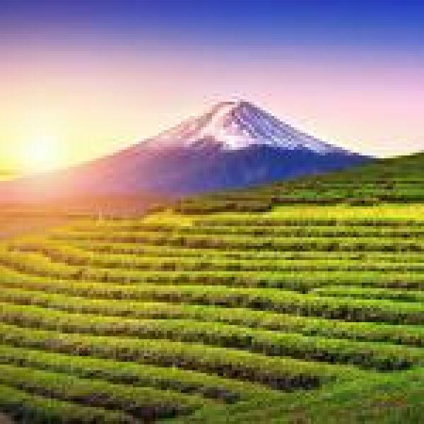 Japán mezőgazdasági robotokkal küzdene a munkaerőhiány ellen